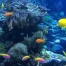 discover snorkeling in tenerife