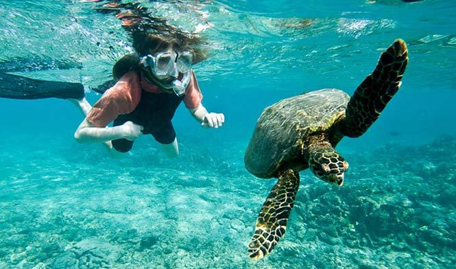 Turtle Beach Snorkeling The Best Beaches In World